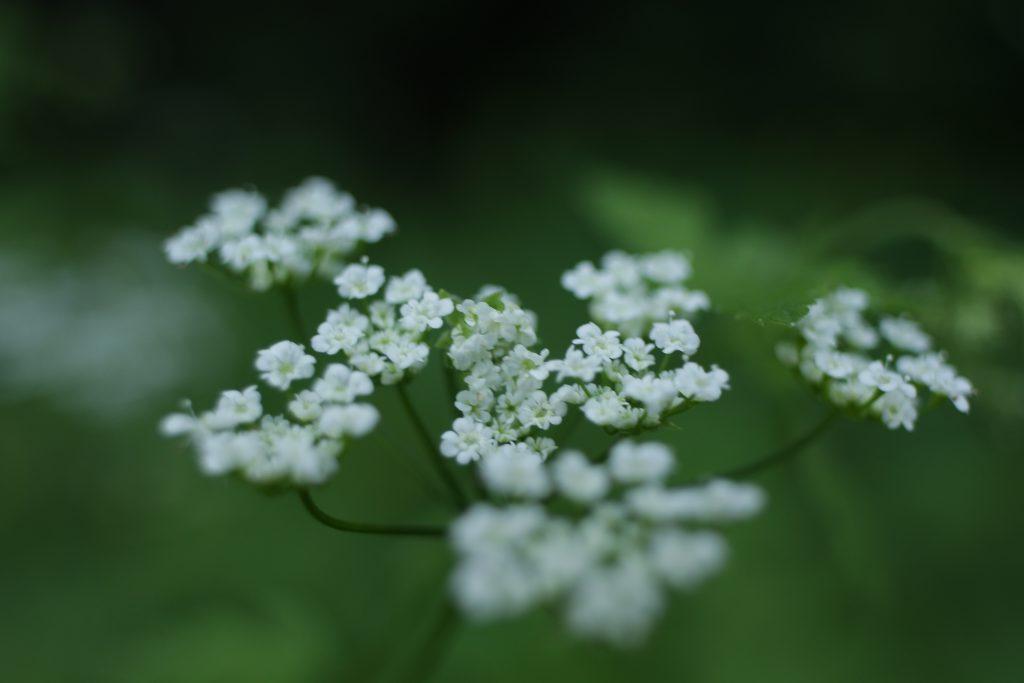 нерезкая фотография цветка