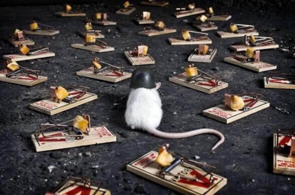 Крыса-кодер идет по минному полю